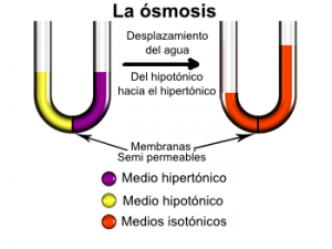 Osmose2-es-300x225 SISTEMA DE ÓSMOSIS: AGUA DE CALIDAD SUPERIOR